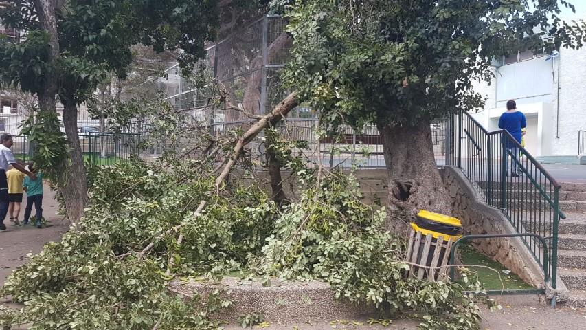 ענף העץ שקרס בבית הספר דוד ילין