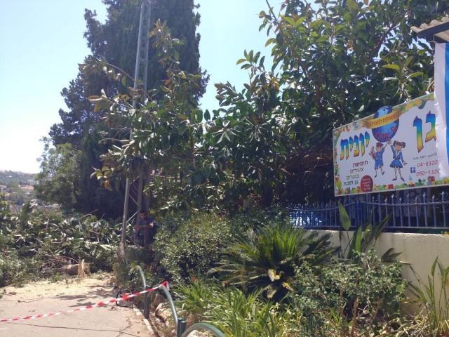 העץ שקרס ליד גן הילדים