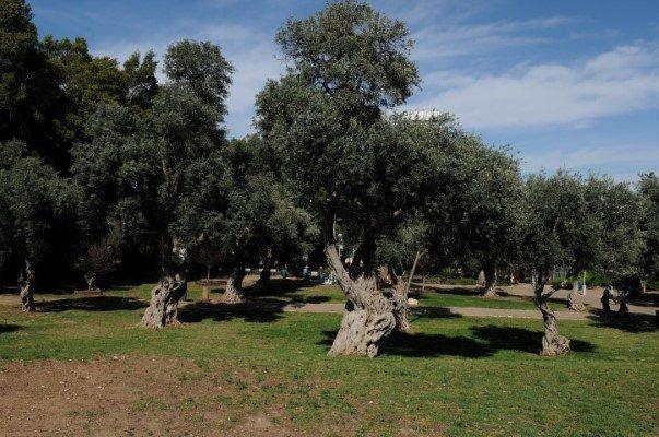 גן בנימין (צילום: רמי שלוש)