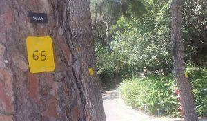 עץ מסומן בגן מניה שוחט