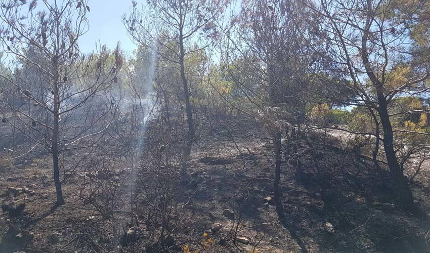 שריפה בפארק הכרמל (צילום: דוברות כיבוי והצלה)