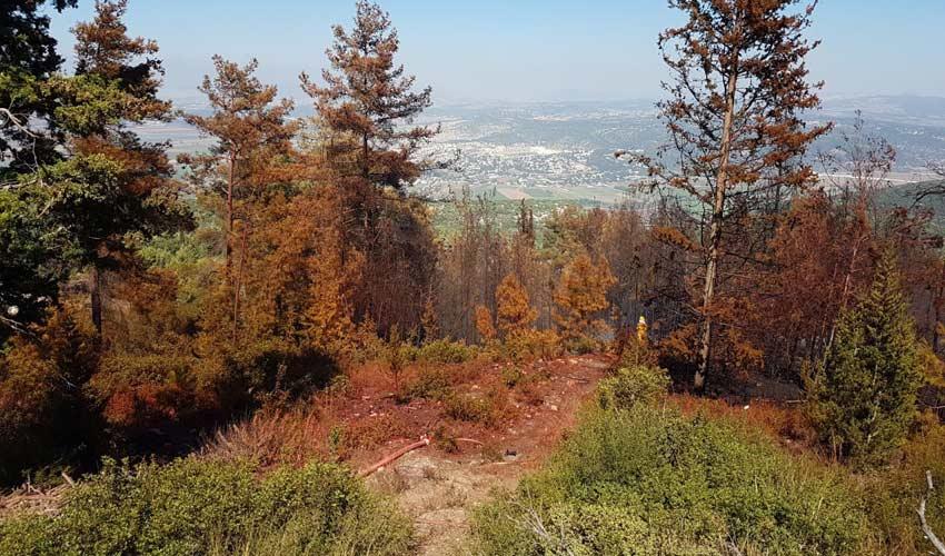 נזקי השריפה (צילום: דוברות כיבוי והצלה)