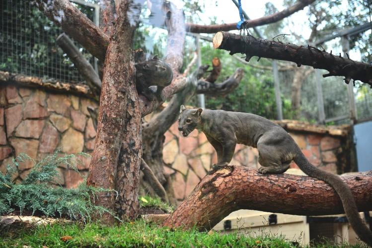 הפוסות בגן החיות בחיפה (צילום: דוברות עיריית חיפה)
