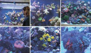"""האלמוגים של ד""""ר מרקו. """"בעלי החיים האלה הם הכי רגישים בעולם"""""""