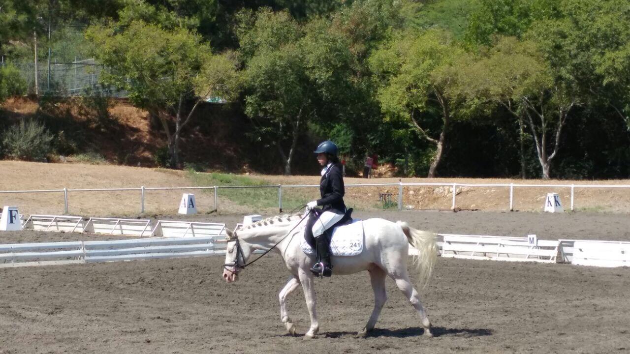 הסוס גולדי במהלך רכיבה