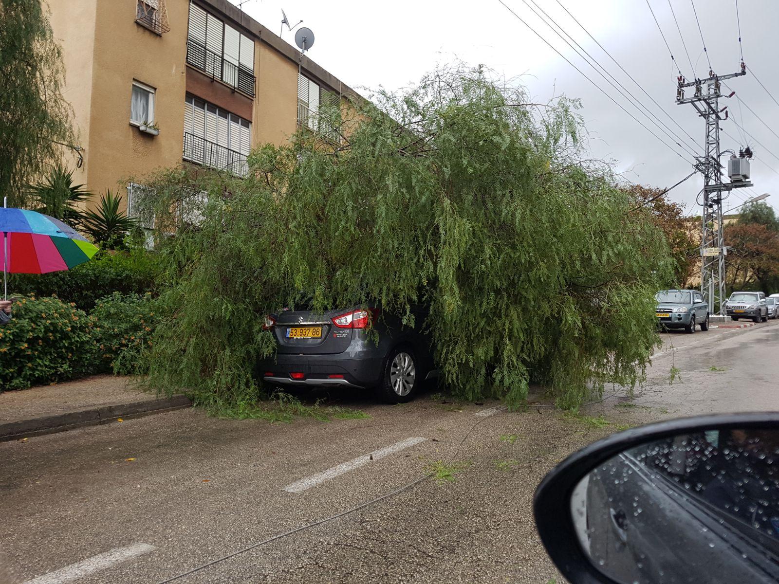 עץ שנפל על רכב בקרית אתא (צילום: דוברות איחוד הצלה כרמל)
