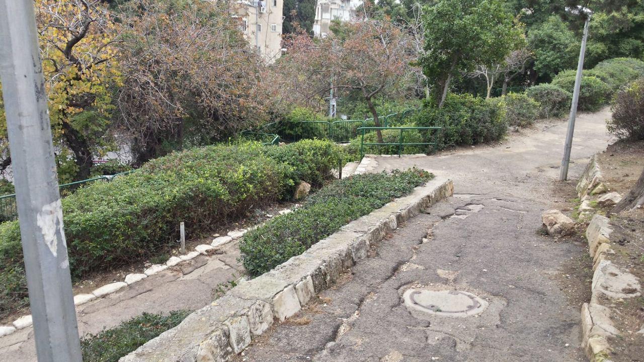 גן התאנים (צילום: מועצת הדר הכרמל)
