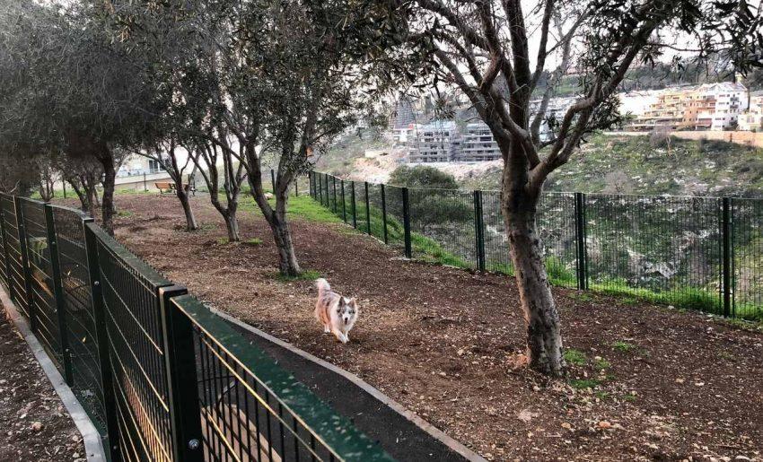 פארק הכלבים ברמת אשכול