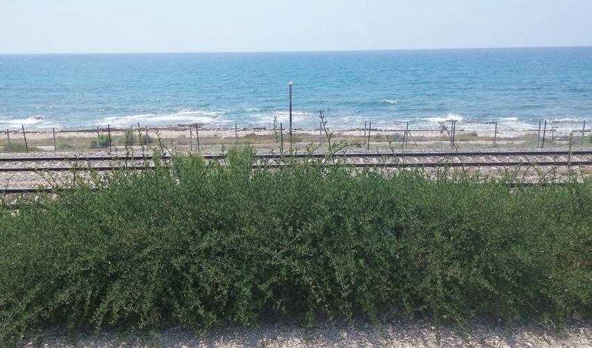 מסילת הרכבת ליד הים (צילום: רמי שלוש)