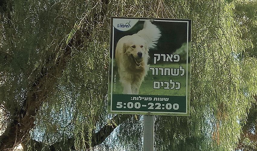 גינת הכלבים בשכונת רוממה החדשה (צילום: אבי שמול)