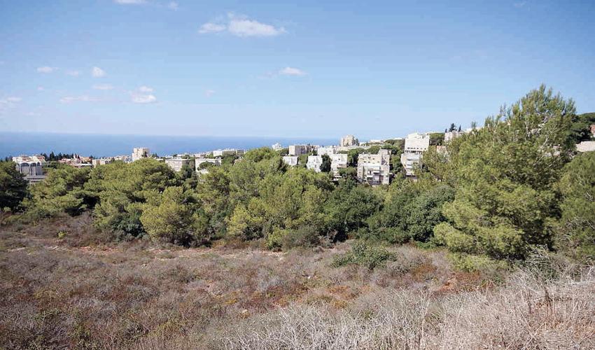 האזור שעליו אמורה לקום שכונת מורדות רמת גולדה (צילום: קובי פאר)
