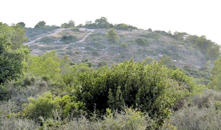 השטח שבו מתוכננת לקום שכונת רמת גוראל (צילום: קובי פאר)