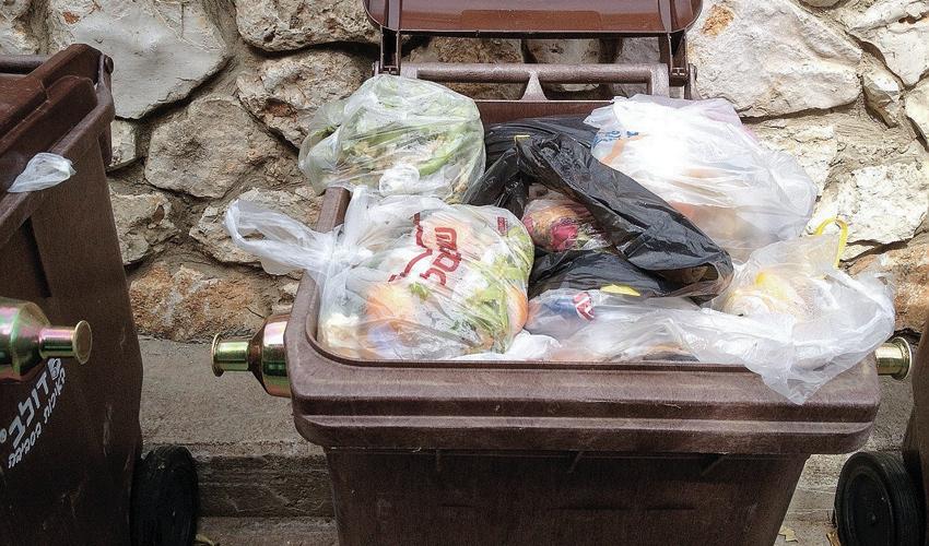 פח פסולת אורגנית (צילום: עמיעד לפידות)