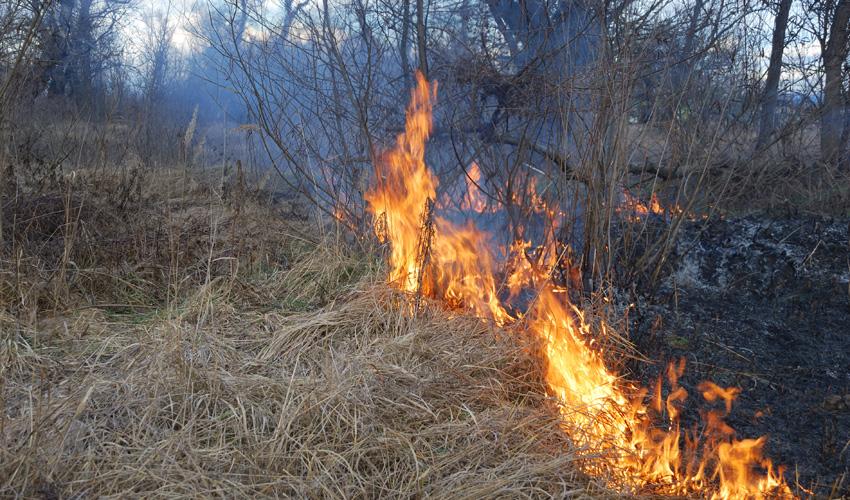 שריפת קוצים (צילום: א.ס.א.פ קריאייטיב INGIMAGE)