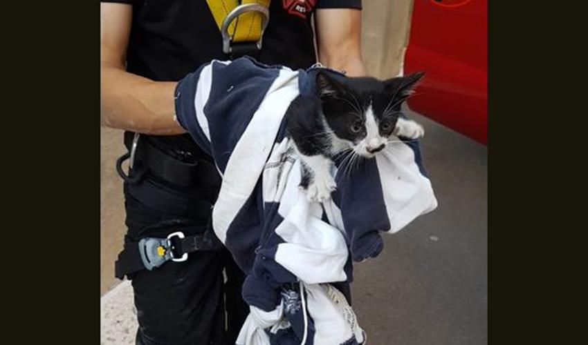 חילוץ חתול מפיר באמצעות שק (צילום: דוברות שירותי הכיבוי)