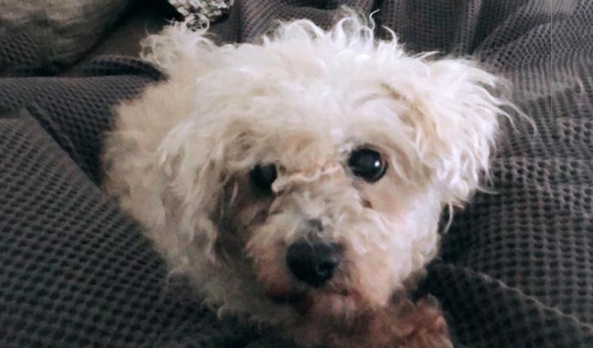 צ'אקי ברקוביץ'. חיי כלב (צילום מתוך חשבון האינסטגרם של לי ברקוביץ')