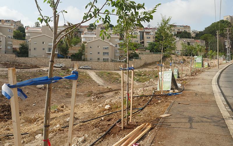נטיעת עצים בחיפה (צילום: דוברות עיריית חיפה)