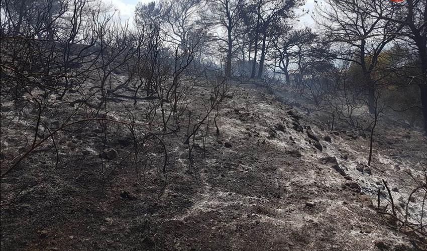 נזקי השריפה (צילום: דוברות מחוז חוף בשירותי כיבוי והצלה)