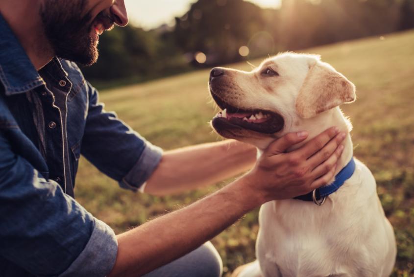 מאלפי כלבים בחיפה והצפון ששווה להכיר (מאגר תמונות: Shutterstock)