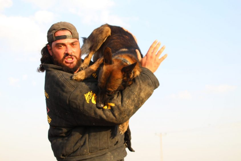 אוראל בן חמו, אילוף כלבים מקצועי (צילום: עצמי)