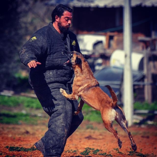 אילוף כלבים למטרות תקיפה, הגנה, הרחה וגישוש (צילום: עצמי)