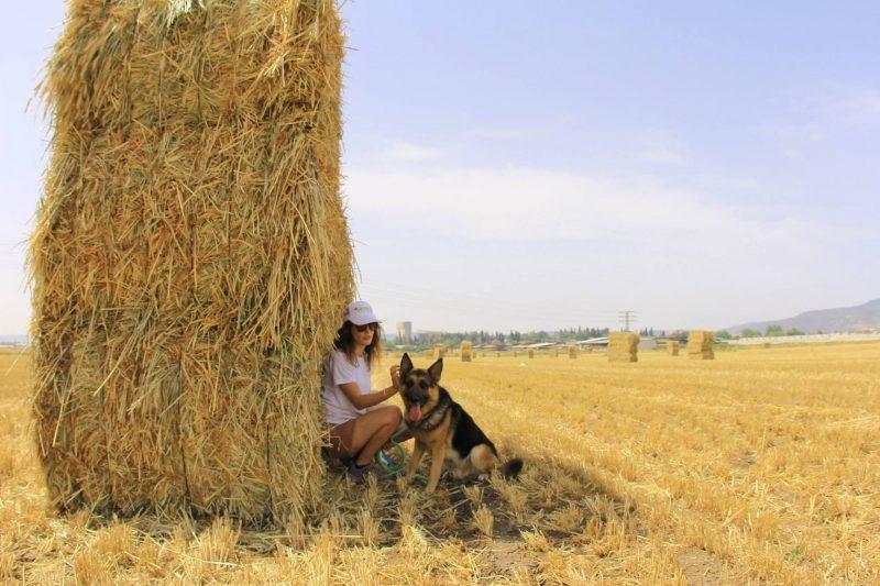 """פנסיון """"בשדות"""". צילום: מאור לוי"""