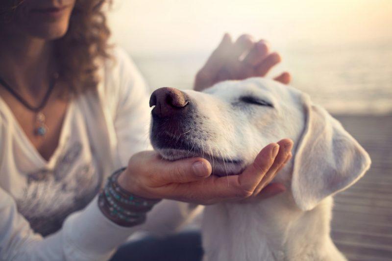 פנסיוני כלבים בחיפה. מאגר Shutterstock