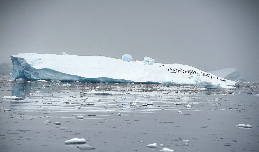 קרחון נמס באנטרקטיקה (צילום: Alexandre Meneghini, REUTERS)