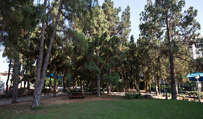 פארק ציבורי (צילום: מגד גוזני)