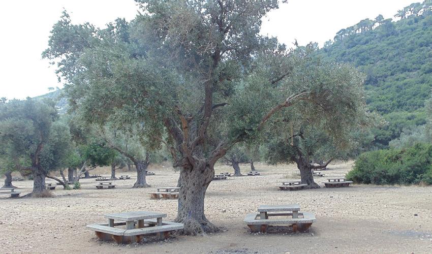 חניון נחל אורן (צילום: יוסי מזור)