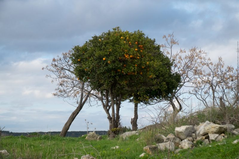 איקרית הבית של יעקוב, מתוך התערוכה 'ארץ ישנה' צילום: אלישבע סמית