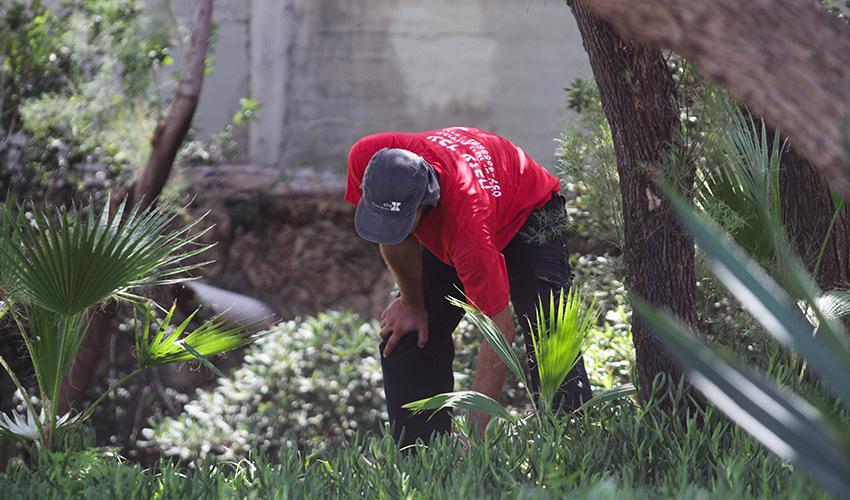 עבודות גינון (צילום: ניר קידר)