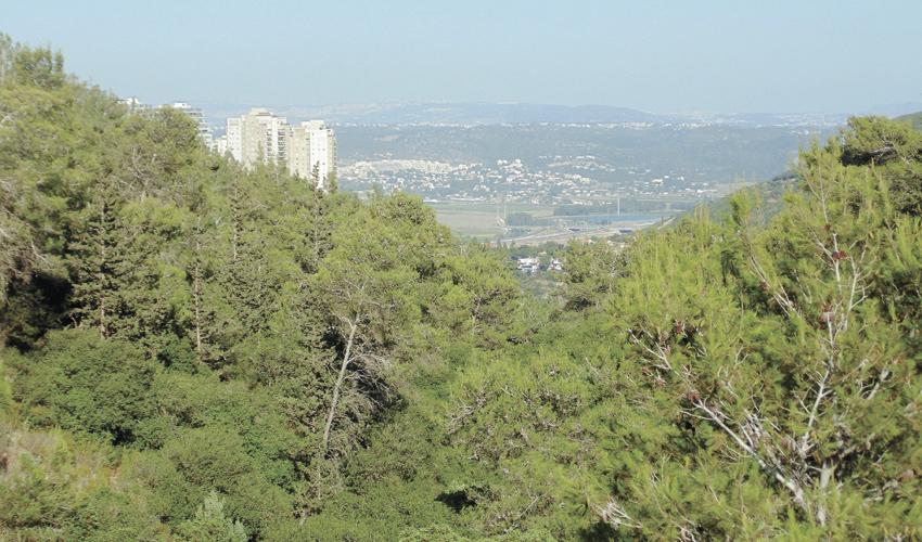 הנוף הנשקף מפארק נשר (צילום: יוסי מזור)