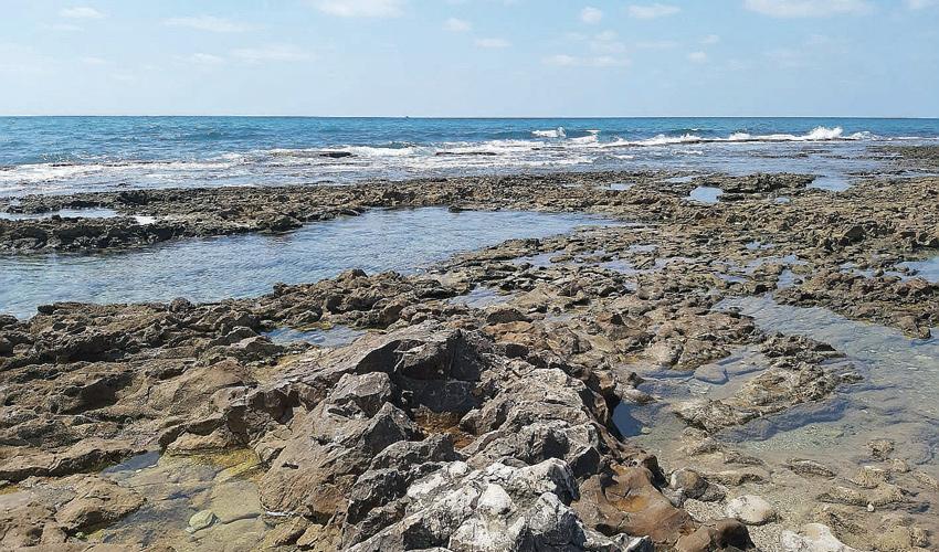 חוף שקמונה (צילום: יוסי מזור)