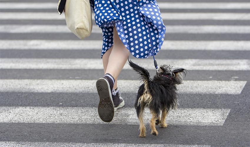 טיול עם כלב (צילום: א.ס.א.פ קריאייטיב/INGIMAGE)