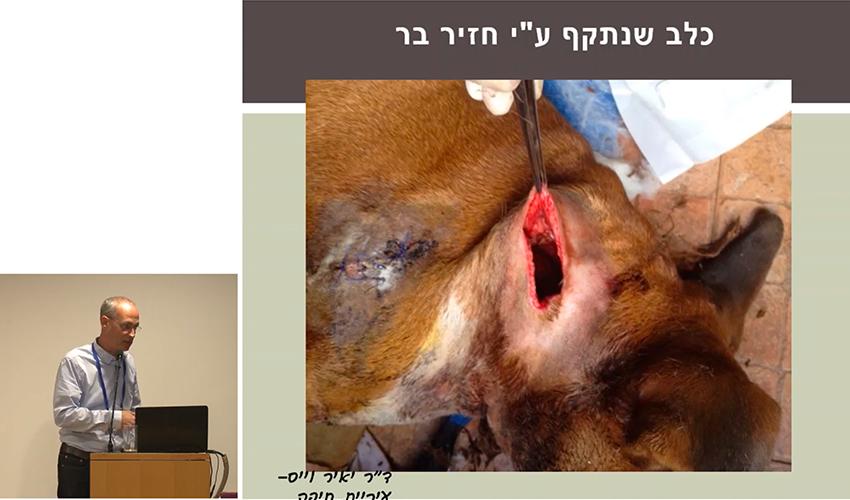 """תקיפה של כלב על ידי חזיר בר (צילום מתוך הרצאתו של ד""""ר יאיר וייס)"""