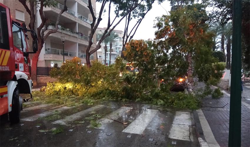 העץ שקרס בקרית ביאליק (צילום: דוברות איחוד הצלה)
