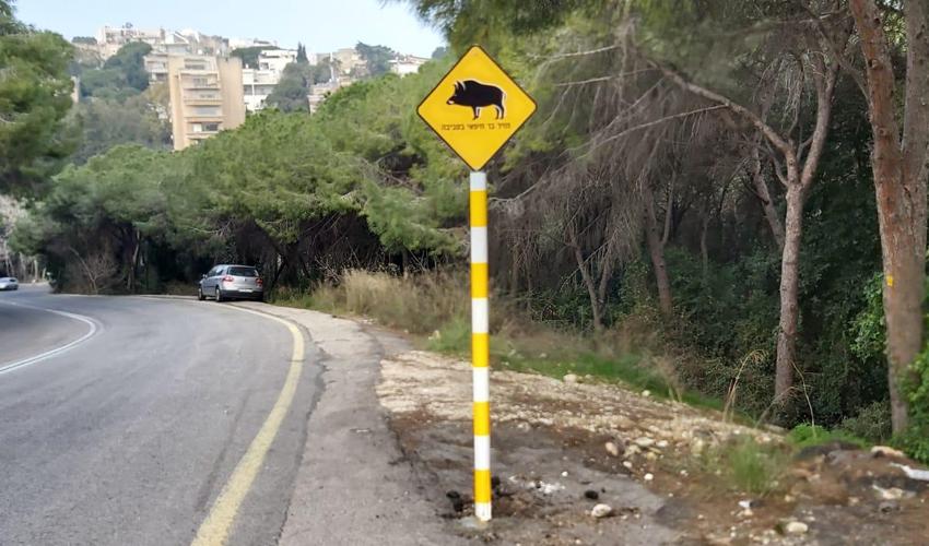 """השלט """"חזיר בר חיפאי בסביבה"""" (צילום מתוך דף הפייסבוק של עיריית חיפה)"""