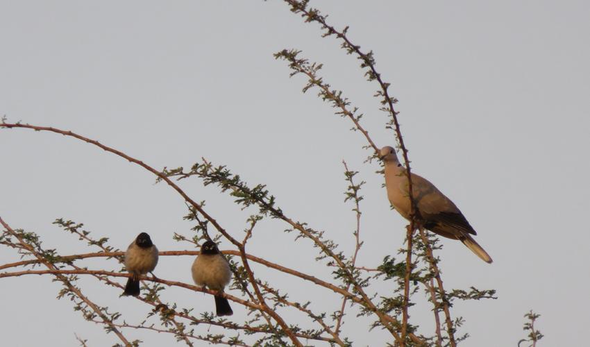 ציפורים ישראליות אופייניות (צילום: משה גלעד)