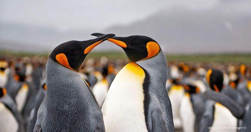 צלם טבע מומלץ: דויד מונסונגו ביכולת צילום נדירה. צילום: דויד מונסונגו
