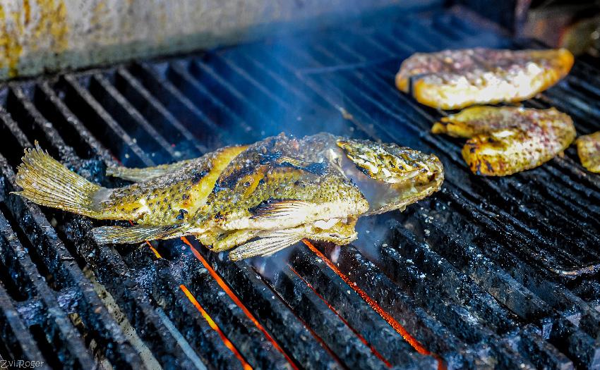 מסעדת ג'קו. כל מה שצריך לדעת על דגים (צילום: צבי רוגר)