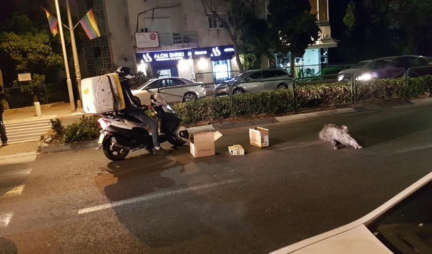 חזיר הבר לאחר התאונה בשדרות מוריה (צילום: ניר סוסלובסקי)