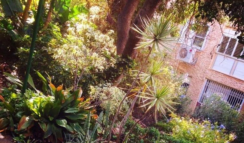 טבע אורבני בחיפה (צילום: דורון שפר)