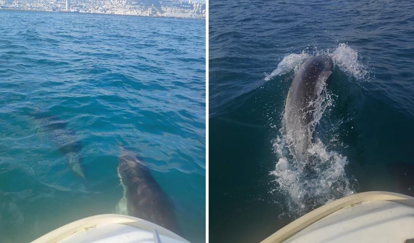 הדולפינים, הבוקר במפרץ חיפה (צילום: אורן סולומון)