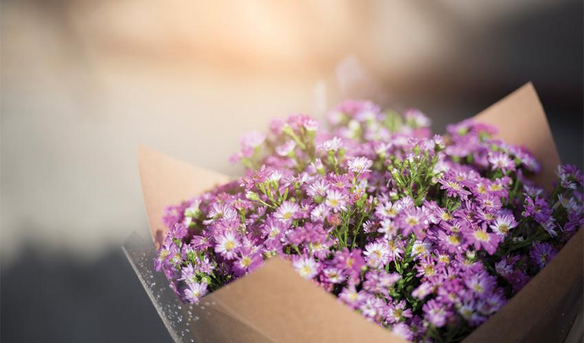 איילת פרחים ׁ(צילום: א.ס.א.פ קריאייטיב/INGIMAGE)