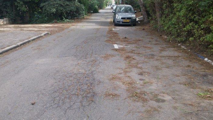 כביש משובש בכרמל הוותיק (צילום: רמי שלוש)