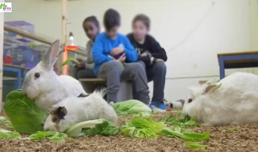 """ילדי בית הספר נירים מטפלים בבעלי החיים (צילום מתוך הסרטון """"נירים 2016"""" ביוטיוב)"""