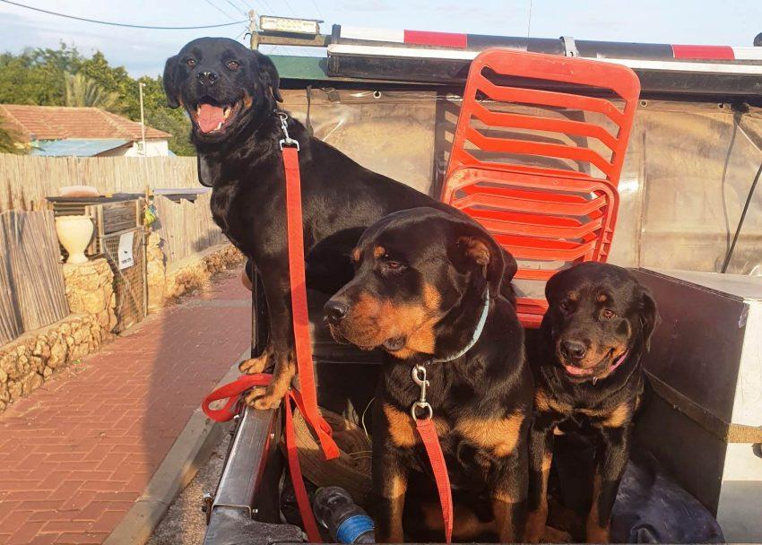 דוגיסיטר - פנסיון כלבים בצפון. צילום פרטי
