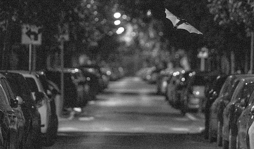 """העבודה """"פליטי אור"""" (צילום: יובל חן)"""
