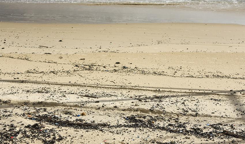 זפת שנסחפה לחוף (צילום: רמי שלוש)